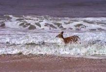 La joie dune biche at the beach