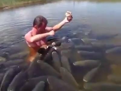 Gros poissons nourris par un homme