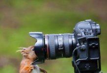 Des photos d'animaux prises à l'instant T