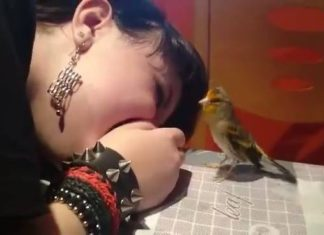Oiseau communique avec jeune femme