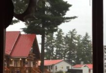 La foudre tombe soudainement sur un arbre