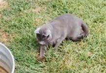Chat et son pote écureuil sur son dos