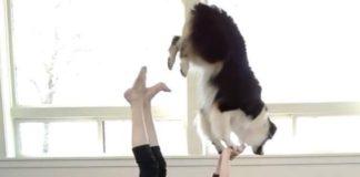 Un nouveau yoga est né, le Doga