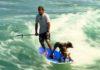 Homme sur paddle avec ses 2 chiens