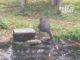 Oie donne à manger à des poissons