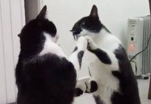 Chat devant miroir, comme je suis beau