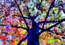 Les plus beaux arbres du monde