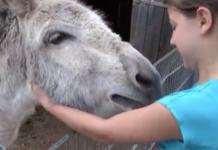 Un âne affectueux avec sa petite maitresse