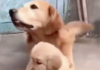 Adorable chienne protège son petit