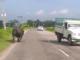 Rhinocéros se balade sur une route
