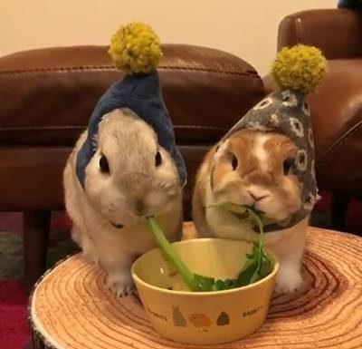 Deux lapins pour un diner romantique en amoureux