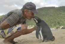 un-pingouin-reconnaissant-avec-son-sauveur