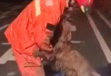 Un chien sauvé éclate de joie
