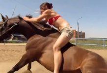 Un cheval bienveillant et intelligent