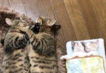 Famille de chats en train de dormir