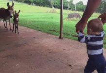Rencontre entre un petit âne et un bébé