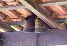 Une chaussure en guise de nid