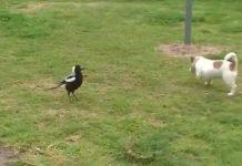 Chien rigolo qui joue avec son ami oiseau