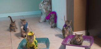 Faire la teuf avec ses potes chats