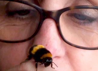 Une abeille pleine de reconnaissance pour sa sauveuse