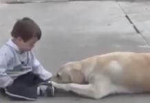Un chien bienveillant et patient