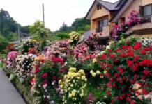 maison abondement fleurie