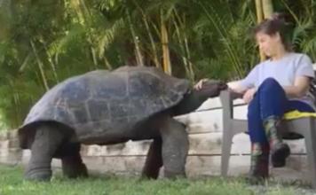 tortue de compagnie géante