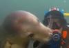 un phoque communique avec un plongeur