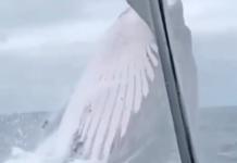 baleine saute hors de l'eau