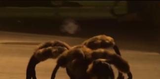 Araignée plus vrai que nature