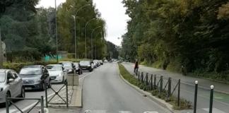 des cygnes traversent un passage piétons