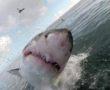 Les dents de la mer en vrai