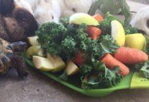 Animaux autour d'un plat de légumes