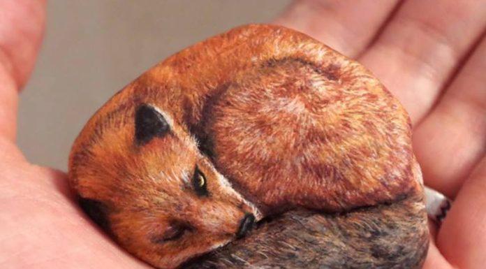 Galets transformés en oeuvre d'art représentant des animaux