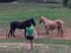 cheval étonné cloture electrifiee