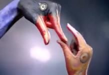 Imitations d'oiseaux avec les mains