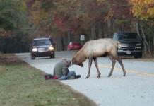 Wapiti essaye d'attaquer un photographe