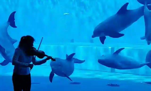 Oui, le dauphin mélomane existe