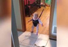 Chien apprend au bébé à sauter dans son fauteuil bébé