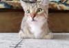 Un chat regarde un film d'horreur
