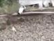 Chiot sauvé par un chat