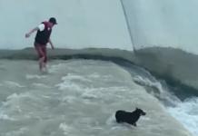 un chien sauvé des eaux