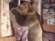 avoir un pote ours