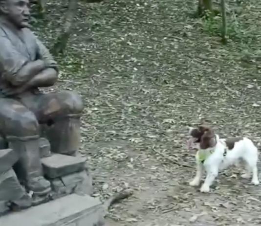 Chien joueur et statue